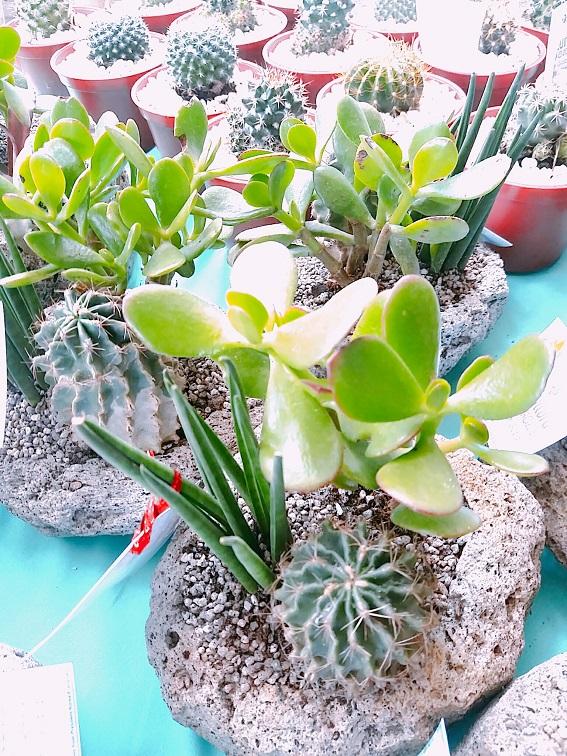 Hortikultura-Succulents